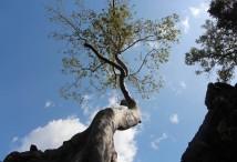 B_2_Cambogia_Angkor What (64)